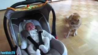 Funny Cats Video - Funny Cats Meeting Babies For First Time - Funny Cat Videos Ever