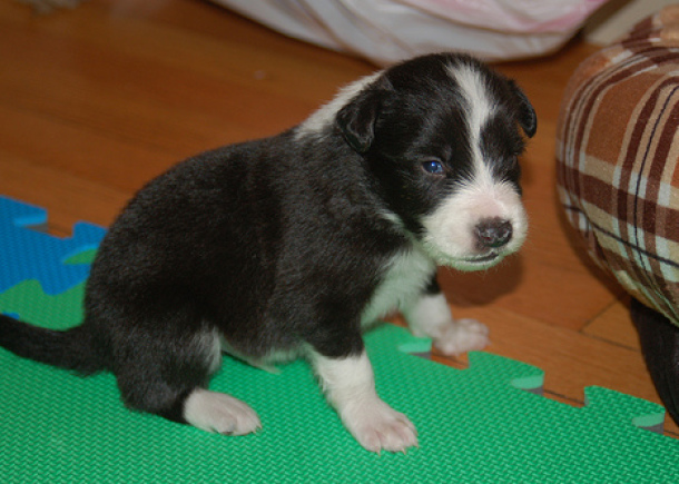 Nice Puppy photos