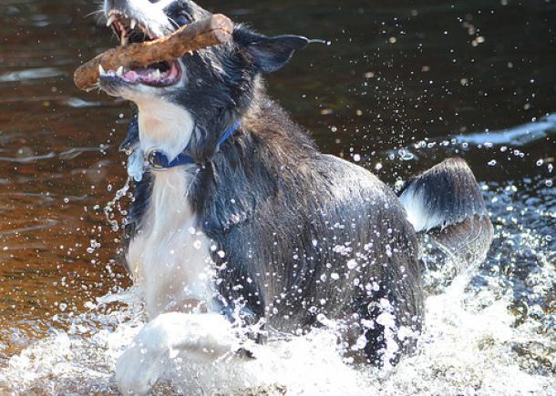 Nice Dog photos
