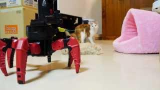 【マンチカンズ】マンチカンの子猫と六足歩行ロボット ~ kittens VS combat creatures ~