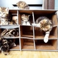 FUNNY CAT VIDEOS PART 3