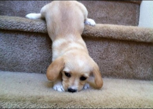 Cute Puppies Going Down Stairs Compilation