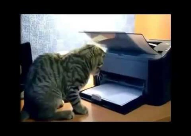 Funny Cat Videos Compilation 2014 Funny Cats Video Funny Animals