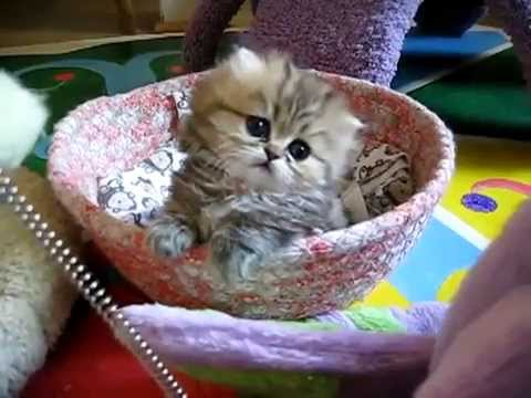 Adorable Baby Kittens, Day 17. Cutest Video Ever! | Cute Cats and Dogs