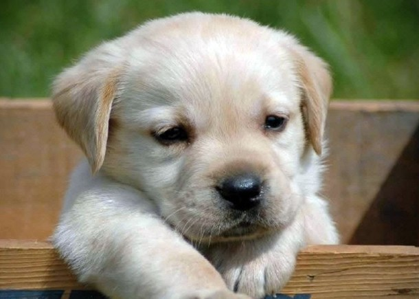 Funny Puppy Videos – Funny Puppy Video Compilation