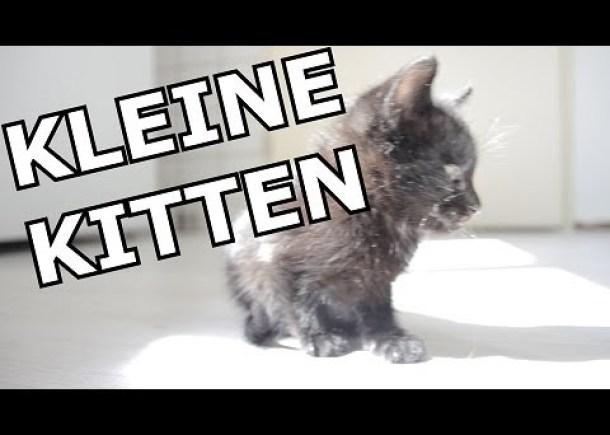 KLEINE KITTEN! [Reactievideo #33]