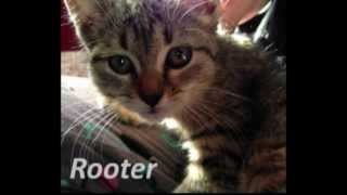 Cute Kitten Rescued from Drain Pipe | Roto-Rooter
