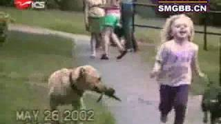 The world's most funny dog video