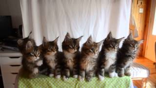 Kittens dance to