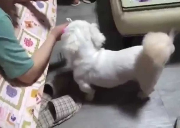 Most Funny Dog Videos Compilation 2014