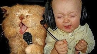 FUNNY VIDEOS: Funny Cats - Funny Baby - Funny Cat Videos - Funny Animals - Funny Babies Videos