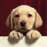 Cute Puppy Sounds