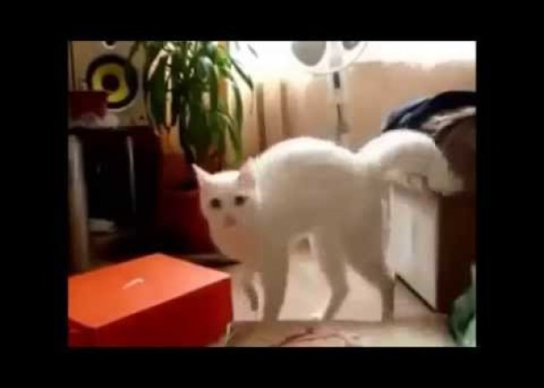 Best Cat Vines, Crazy cats, Funny cats, Funny animal videos, best animal vines