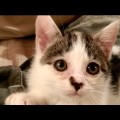 From Japan — A video diary of a month with a rescued kitten