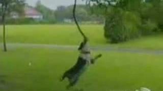 crazy dogs ( perros locos)