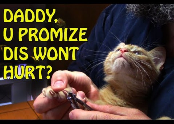 Trim Your Kittens' Claws – Safe & Easy