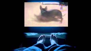 Weird and crazy dogs Funny dog compilation