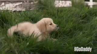 GoDaddy's Super Bowl XLIX 2015 Commercial Mocks Budweiser's Lost Puppy Dog Sentimental Ad