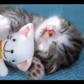 Funny Cats Video – Funny Videos 2014 – Funny Cat Videos – Funny Animals Funny Fails Funny Vines