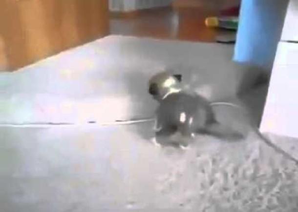 Little Kitten vs Little Puppy :) Really Funny Fight