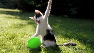 Cats vs balloon explosion ( Funny Compilation)