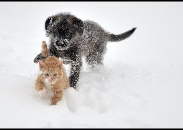 Puppies And Kittens Playing In Snow Compilation
