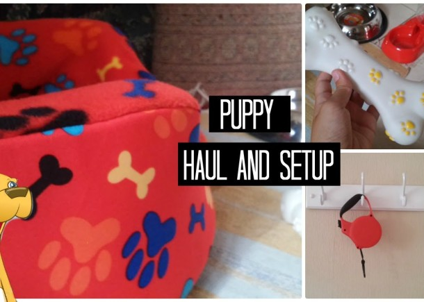 Puppy Haul And Setup Cute Cats And Dogs
