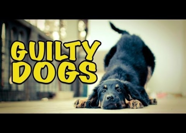Ultimate Funny Guilty Dog Video Compilation 2014 NEW HD