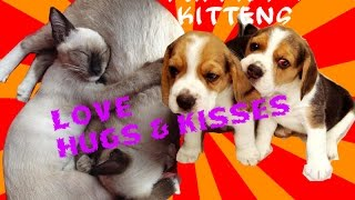 Cute Funny Puppies & Kittens,Dogs and Cats Love Kisses and  Hugs! [New HD]