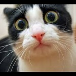 Cats Are Awesome 2013 – Funny Cats Compilation