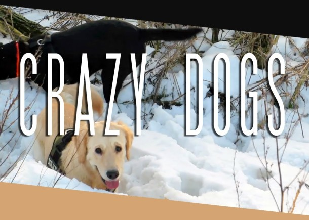 CRAZY DOGS (2.2.14 – Day 1188)