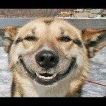 Funny Dogs Smiling Compilation 2013 [HD]