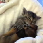 Intense puppy and kitten wrestling!
