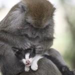 Monkey And Kitten Best Friends