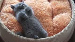 Cute/Funny Kitten/Cats And Puppies/Dogs Compilation 2013 EPIC - 10 Minutes! [HD]