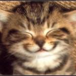 videos de risa 2013 new funny cats,funny cat videos 2013,funny animals 2013,funny video 2013,
