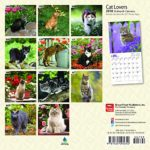 Cat Lovers 2018 7 x 7 Inch Monthly Mini Wall Calendar, Animals Domestic Cats