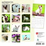 Siamese Cats 2018 12 x 12 Inch Monthly Square Wall Calendar, Animals Cats