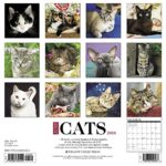 Just Cats 2018 Wall Calendar